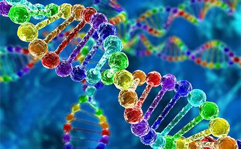 гены витамин Д